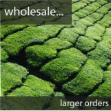wholesale matcha